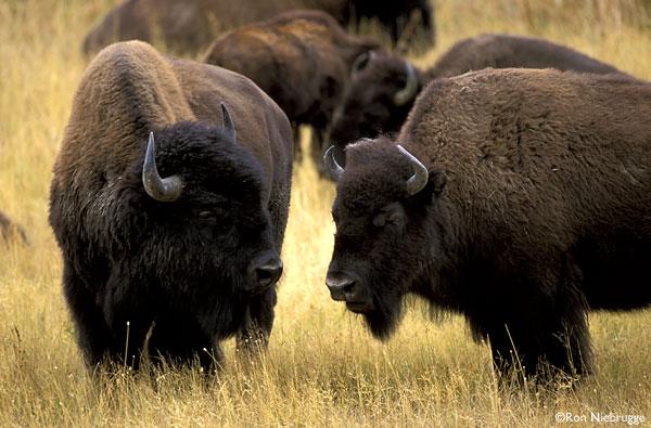 MMO Farm Report: Harvey Wins Third Straight In 3-0 Buffalo Win