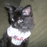 MMO Fan Shot: Meet Metsie, A Bewildered Mets Fan