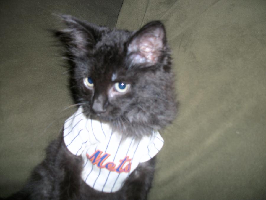 MMO Fan Shot: Meet Metsie, A Bewildered Mets Fan