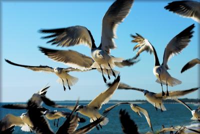 The_Birds_by_TThealer