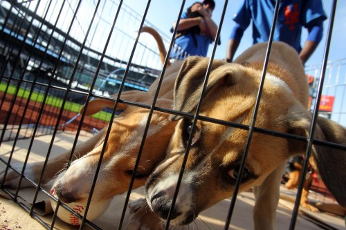 bark in park dog citi